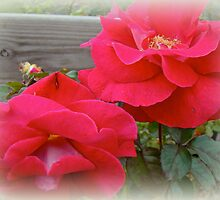 Red Roses For My Love by MotherNature2