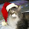 HO, ho, ho! - PETS DRESSED FOR CHRISTMAS