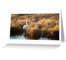 Great White Egret - Chincoteague National Wildlife Refuge, Virginia  Greeting Card