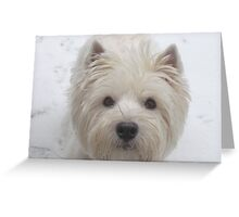 Westie  White Greeting Card