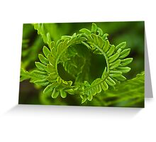 Crown fern Greeting Card
