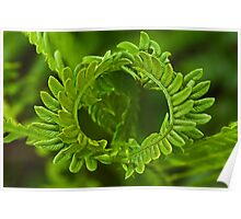 Crown fern Poster