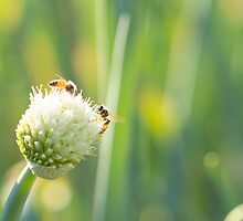 Bees and Bokeh by Josie Eldred