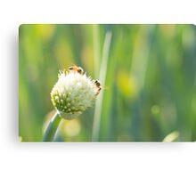 Bees and Bokeh Canvas Print