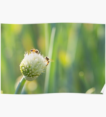 Bees and Bokeh Poster