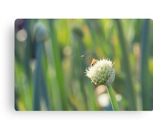 Bugs and Bokeh Canvas Print