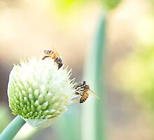Bees and Bokeh II by Josie Eldred