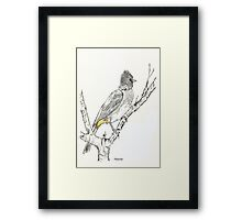 Black-eyed Bulbul in my garden Framed Print