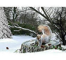 Harry in Winter Photographic Print