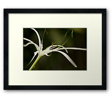 Droplets on Orchid Framed Print