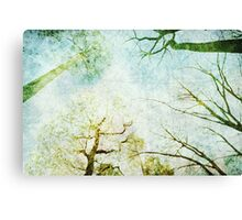 Trees Up High Abstract Photographic Art Canvas Print