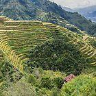 Banaue Rice Terraces by Paul Weston
