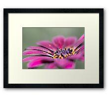 Sunny Bloom Framed Print