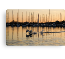 The Golden Takeoff - Swan, Sunset and Yachts at a Marina in Toronto, Canada Canvas Print