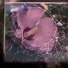 Entwined by Lozzar Flowers & Art