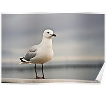 Gull by the sea Poster