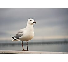 Gull by the sea Photographic Print