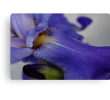 zebra iris 'tongue' Canvas Print