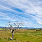 Rural Tasmania by pennyswork