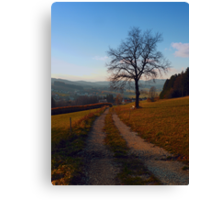 Tree, trail and indian summer evening | landscape photography Canvas Print