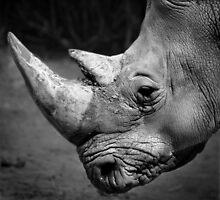 Perth zoo Southern White Rhino by BeninFreo