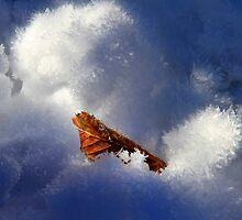 Ice Leaf by Angelika  Vogel
