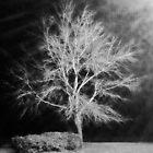 'MOONLIGHT TREE' by Jerry Kirk
