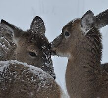 Snowy Love by eawhite2012