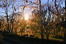 Sunset Through The Trees by ©Dawne M. Dunton