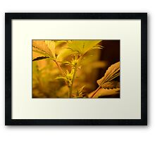 A little part Framed Print