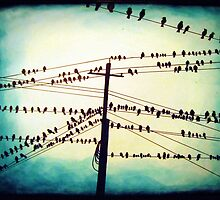 Birds on a wire by MicheleWiesen