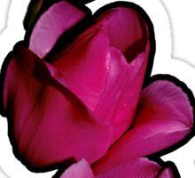 Three Tulips of Fuchsia-Red Sticker