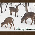 Merry Christmas Card - Whitetail Deer In Snow by MotherNature
