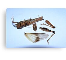 Insect composition Canvas Print