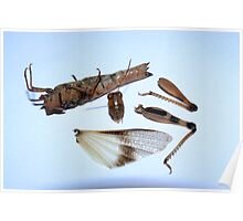 Insect composition Poster
