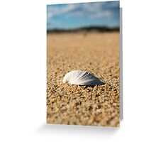 Solitary Shell - Assateague Island National Seashore, Maryland Greeting Card