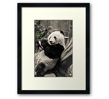 The Sound Of Bamboo Framed Print