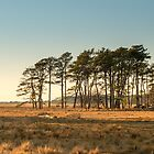 Chincoteague Plains - Chincoteague National Wildlife Refuge, Virginia by Jason Heritage