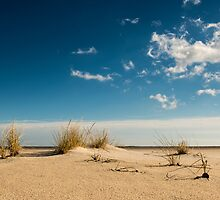 American Beachgrass - Assateague Island National Seashore, Maryland by Jason Heritage
