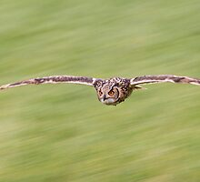 Indian Eagle Owl Inflight by M.S. Photography & Art