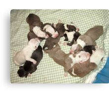 Wonder's New Puppies - One Day Old Canvas Print