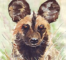 Afrika-Wildehond (Lycaon pictus) by Maree  Clarkson