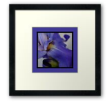 zebra iris 'tongue' (square) Framed Print