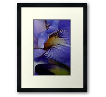 blue iris flower and bud abstract Framed Print