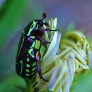 The Green Bug - Fiddler Beetle by Liz Worth