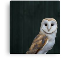 Barn Owl portrait Canvas Print