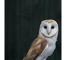 Barn Owl portrait Photographic Print