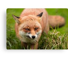 Fantastic Mr Fox Canvas Print