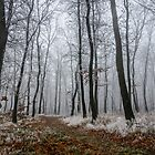 Frosty walk by TOM KLAUSZ