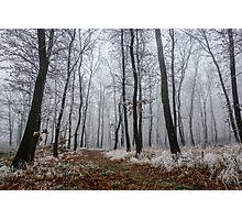 Frosty walk Photographic Print